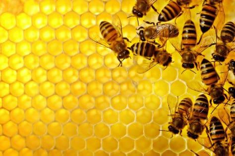local honey benefits
