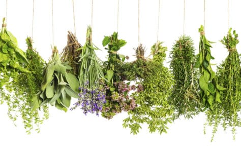 plant based benefits